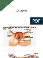 Anatomi Repro