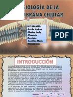 Ppt Fisiologia de La Membrana