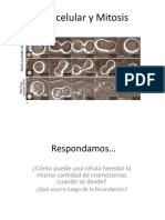 Ciclo Celular y Mitosis Y CANCER