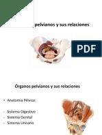 Bases Anatomicas y Biomecanicas de La Pelvis 2