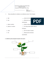 examen plantas sexto grado