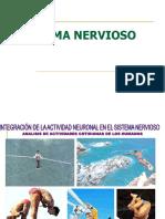 Sistema Nervioso FIRME