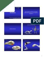 4.Anatomia.pdf