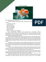 Download 600 Koleksi Gambar Flora Moras Macraura Paling Bagus HD