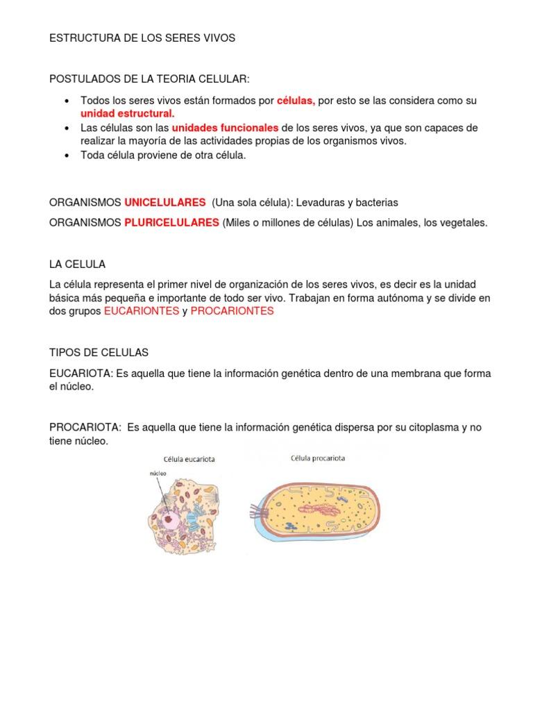 Estructura De Los Seres Vivos Docx Célula Biología