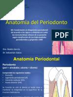 2 Anatomia Periodontal