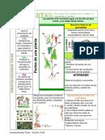 Las plantas, tabla Dibujada Con Lapiz
