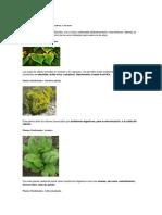 230 Plantas Medicinales Más Efectivas y Sus Usos