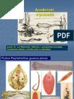 Leccion_16_Los_Platelmintos_Generalidades.pdf