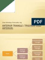 Trigonum Coli Anterior
