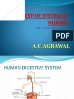 digestive system in human