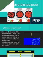 Osmosis en Glóbulos Rojos