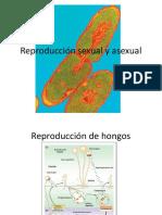 60425_Reproducción Sexual y Asexual