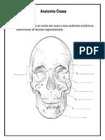 Pinta - Anatomia