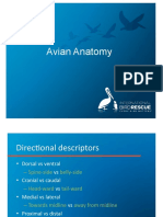 Avian Anatomy and Exams - International Bird Rescue