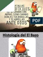 Histofisiología Del Bazo EXPO
