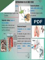 Estructuras respiratorias