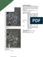 Petrografi_Gilang_ITATS(1)