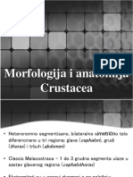 06 - Morfologija i Anatomija Crustacea