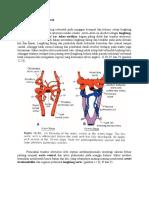 Embriologi Pembuluh Darah.docx