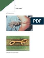 Apostila Parasitologia Com Fotos