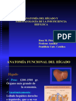 anatomiafisologiahigado