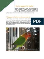 mutaciones fischer.pdf