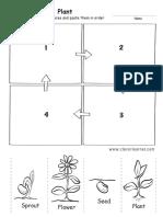 Life Cycle of a Plant Preschool Worksheet