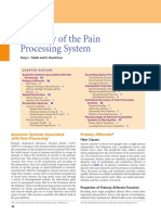 C2 - Anatomy of the Pain Processing System