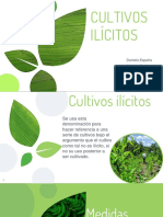 Cultivos-ilicitos.pptx