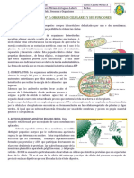 APUNTE N° 2 ORGANELOS CELULARES.doc