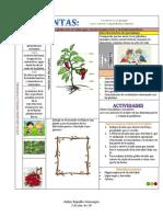 Las Plantas (3)