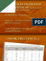 Pigmentos_fotosinteticos