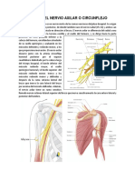 Lesion Del Nervio Axilar