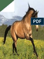 caballo bayo.pdf