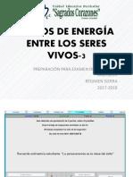 Flujos de Energía Entre Los Seres Vivos 3