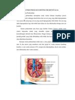 Anatomi Fisiologi Sistem Urogenitalia