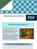 Bosque-templado-caducifolio