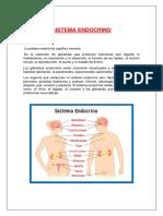 Sistema Endocrin1
