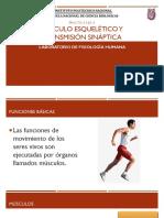 Musculo Esqueletico y Transmision Sinaptica (1)