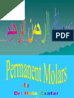 9- Maxillary Permanent Molars 2