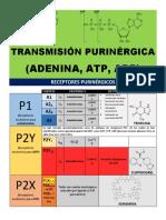 Transmisión Purinérgica (ATP, ADP y Ad)