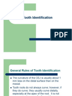 Tooth Identification