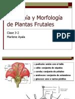 Clase+3-2+Anatomía+y+Morfología+de+Plantas+Frutales+alumnos