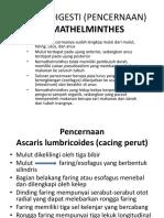 Sistem Digesti Nemathelmintes Dan Nematormopha