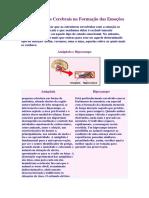 As Estruturas Cerebrais Na Formação Das Emoções