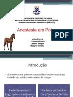 Anestesia Em Potros