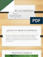Micro Ecosistema