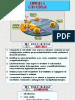 (3)a Ciclo Celular - Arteaga m. Modif.