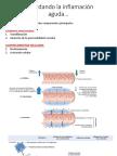 6- Mediadores inflamatorios